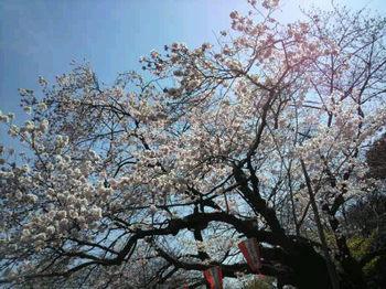 上野公園花盛り.jpg